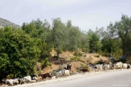 on the road, Albanien