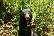 Borneon Sun Bear Conservation Center