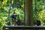 Orang Utan Sanctuary, Borneo