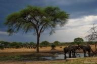 Senyanti Safari Camp, Botswana