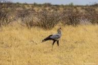 Central Kalahari Game Reserve, Botswana