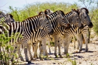 Makgadikgadi Nationalpark, Botswana