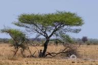 Nxai Pan NP, Botswana