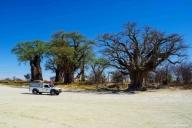 Baines Baobabs, Nxai Pan NP, Botswana