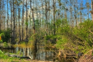 2018-02-27-everglades-np-hdr2