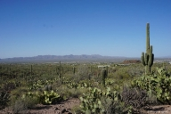 Saguaro Nationalpark