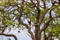 Bwabwata Nationalpark, Namibia