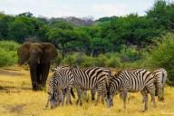 Mahango Game Park, Namibia