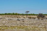 Etosha Nationalpark, Namibia