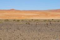 Namib-Naukluft NP, Sossusvlei, Namibia