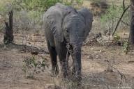 Krüger Nationalpark, Südafrika