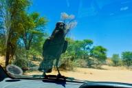 Kgalagadi Transfrontier Park, Südafrika
