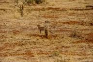 Mokala NP, Südafrika
