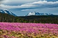Kluane Nationalpark, Yukon